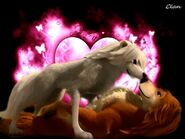 Garth-love-Lilly-alpha-and-omega-22473709-800-600-1-