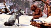 Bear-cub-meets-Humphrey-alpha-and-omega-16370910-1400-788