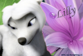 Lillys-Lilly-Bloom-lilly-from-the-movie-alpha-and-omega-21220638-120-81