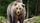 Bear-photo-not-cat-scaled