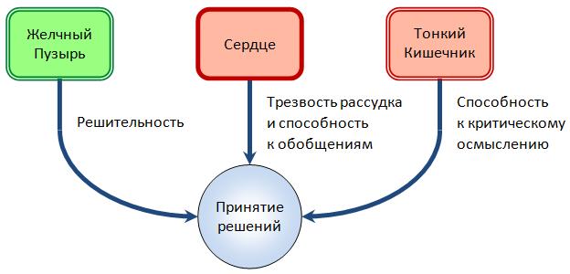Взаимосвязь между Сердцем, Тонким Кишечником и Желчным Пузырем в принятии решений