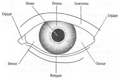 Соответствие между частями глаз и Внутренними Органами
