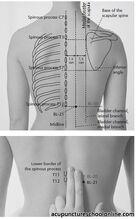 BL-21-Stomach-Shu-WEISHU-1