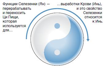 Отношение Инь-Ян к функциям и строению