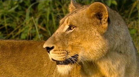 Pure Nature Specials - Africa's Super Seven