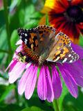 DSCN0007 - Bee - Butterfly - Flower