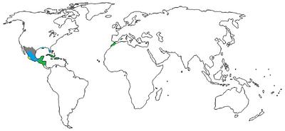 1470 A.D. (2)