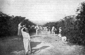 Кофейная плантация XX век