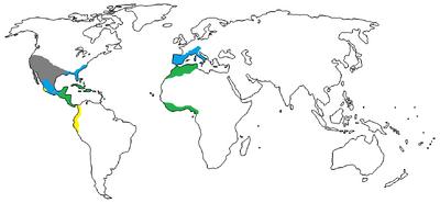 1550 A.D.