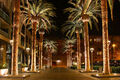 1024px-SAN JOSE CALIFORNIA PALM TREE 2010.jpg