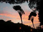 SDP Sunset01 (VegWorld)