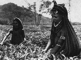 Папуасы на плантациях