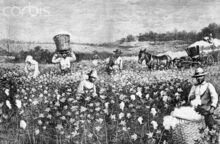 Slaves-in-the-Cotton-Fields