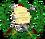 Escudo de Armas de Guatemala