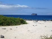 The beach at North Seymour Island in the Galapagos