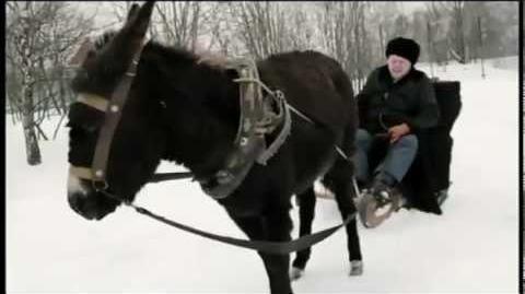 Жириновский избивает осла!
