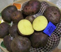 Andean black potato 2