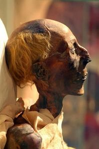 Ramesses II mummy in profile (colored picture)