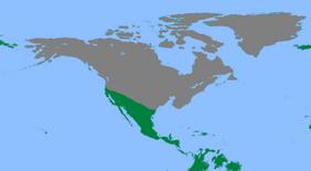 Modern North Tranare