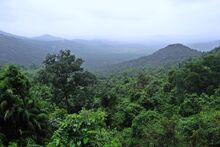 Rainforest-384944 960 720