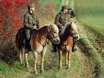 HaflingerGrenzschutz