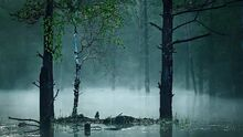 Lets-travel-to-russia-with-alexei-mikhailov-mystic-swamp