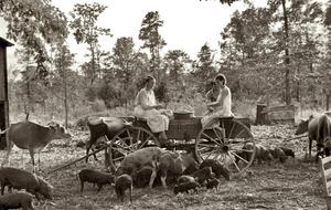 Фермеры6