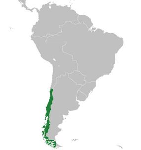 Chile-1918