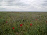 800px-Калмыцкая степь в апреле