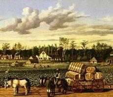 BaumwollPlantage1790