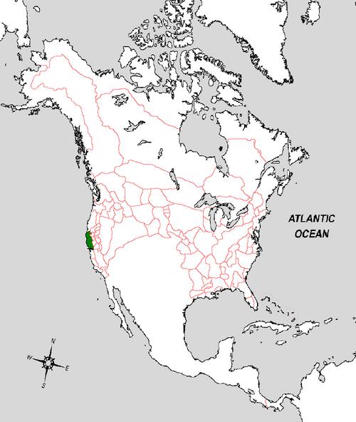 Chinese Leifia Map (the Kalmar Union)