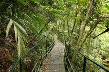 Trail to Gilneas