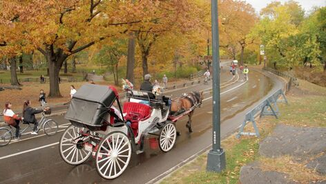 Horse-carriage-01 Central Park