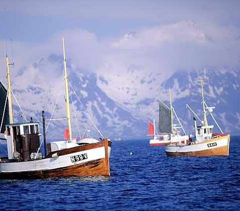 File:Norwegian fishing boats.jpg