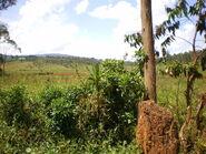 Nature In Kayanza