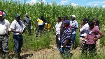 Guyana canecutters at Uitvlugt Sugar Estate