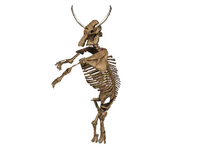Cyclops skeleton