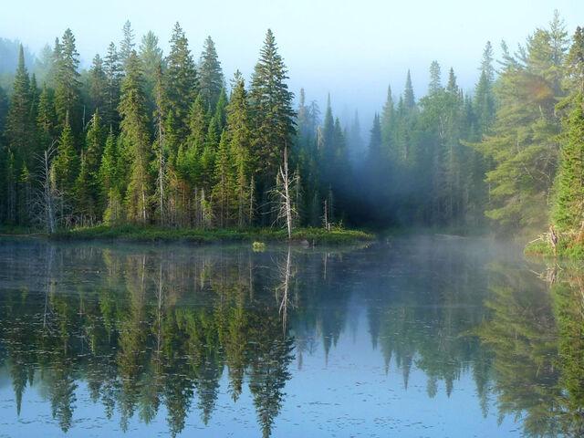 File:Donaughen Forest-0.jpg