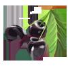 Cherriesblack