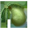 Peargreen