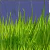Meadowgrassforeground