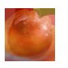 Plumgolden