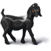 Pygmygoatblack