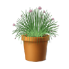Pottedchives