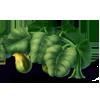 Harvestgourdvinegourds