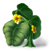 Harvestgourdvineflowering
