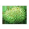 Braincloudcoralgreen