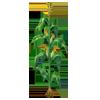 Cornplant3