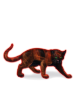 Ocelawildfirewild