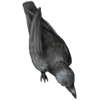 Thievingharvestcrowblack